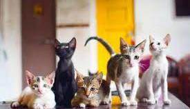 India's First Cat Cafe – Mumbai