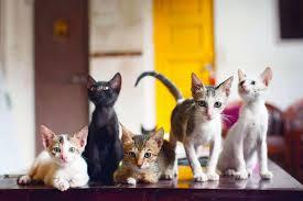 India's First Cat Cafe - Mumbai